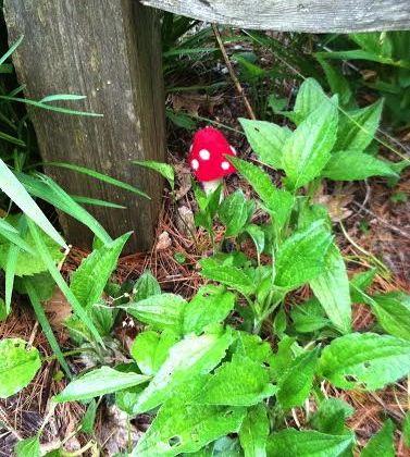 Squam Mushroom